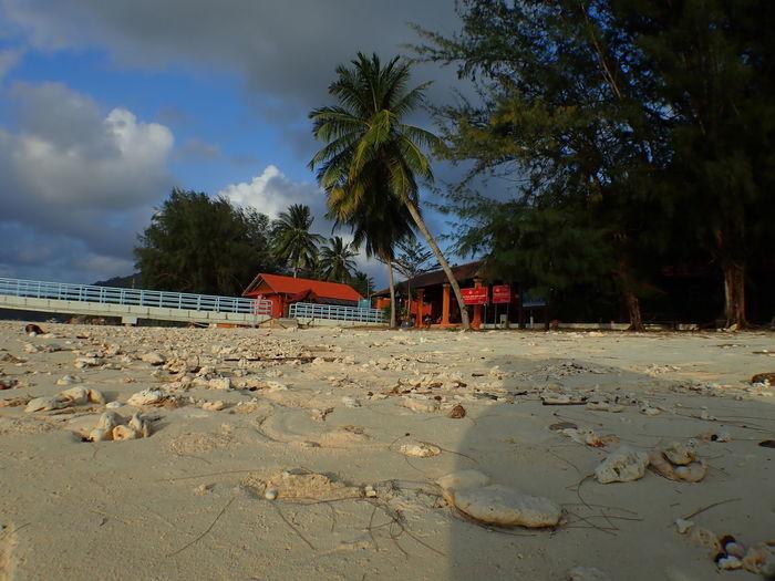 House by palm trees on beach against sky
