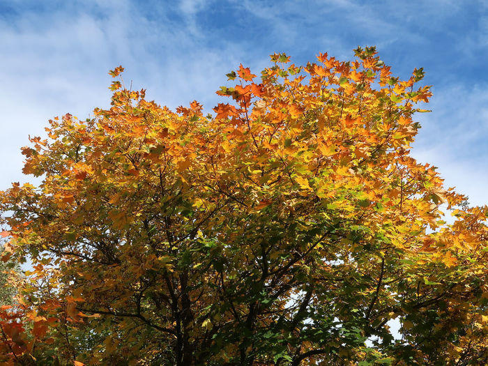 Low angle view of tree against sky during autumn
