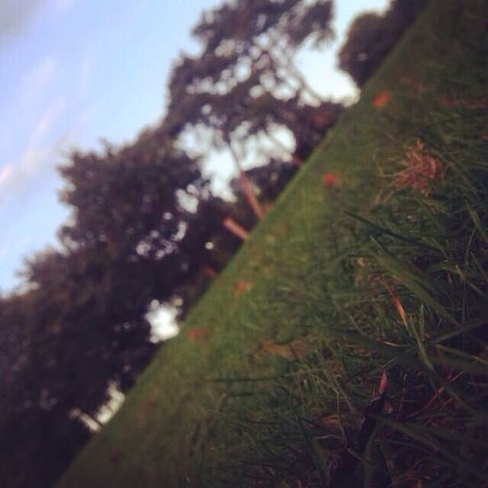 🌳🍂🌸🍃🌲 Grass Tree Nature Growth Close-up Tranquility Green Color Selective Focus Field