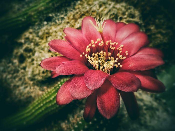 Tv_flowers Macro_brilliance Bns_flowers Superb_flowers Petal_perfection Ip_blossoms Kings_flora Top_macro Flowersandmacro Explore_dof