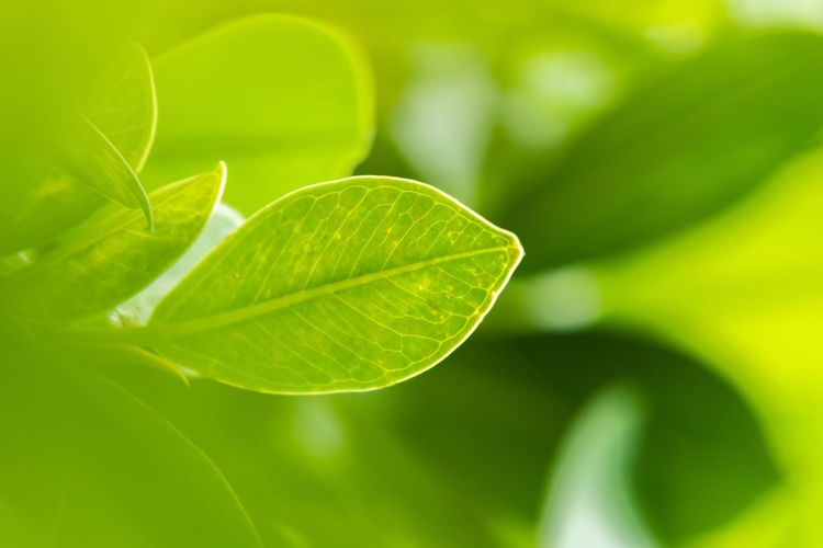 Nature Nature_collection Naturelovers Green Foliage Backgrounds Macro Greenery Wallpaper Leaf Vein Leaves Plant Life Stem Dew Natural Pattern Blade Of Grass Stamen Focus Bud Photosynthesis Relaxed Moments New Life Beginnings Botany In Bloom Frond Exotic Damselfly