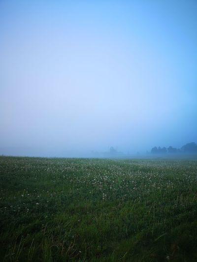 Foggy Landscape