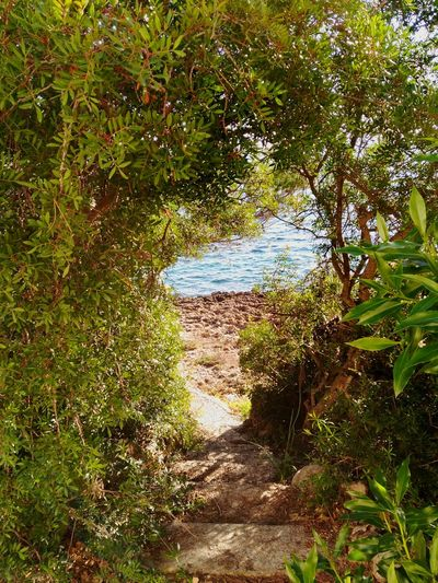 Green Color Growth Tree Nature No People Day Beauty In Nature Outdoors Tranquility Scenics Water Tree Reflection Sea Pier Coastline Mallorca Illuminated Sunshine Backgrounds Close-up