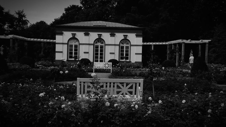 Exterior View Exterior EyeEm Nature Lover First Eyeem Photo EyeEmNewHere Flower Head Rose - Flower Garden Architecture Black & White Blooming Smartphonephotography Art Architecture Tree Architecture Building Exterior Sky Rose Petals 2018 In One Photograph Moments Of Happiness It's About The Journey My Best Photo