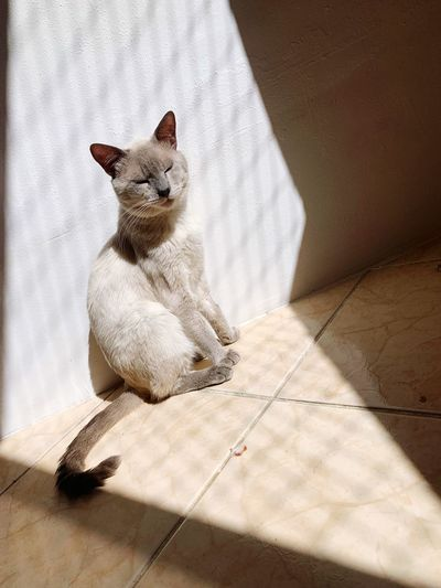 Cat relaxing on tiled floor during sunny day