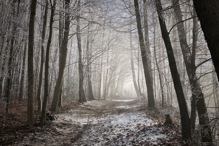 Nature Photography Frozen Picoftheday Winter Nature_collection Winter Wonderland Photooftheday Tree Forest Plant WoodLand Land Tranquility Nature Scenics - Nature Beauty In Nature Tree Trunk Fog Tranquil Scene Outdoors Coniferous Tree
