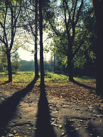 Park Walking Around Beautifultrees
