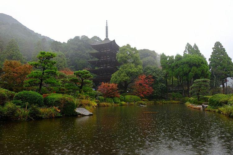 Ruriko Temple- five story pagoda built in 1442. A Buddist temple located in Yamaguchi City. Rain Temple Fall Autumn Colors Autumn Japanese Culture Buddist Temple Ultimate Japan