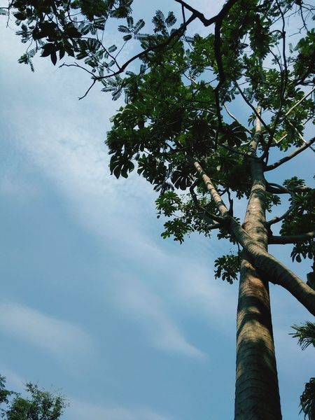 backgroun Backgroun Tree Palm Tree Branch Tree Trunk Blue Sky Coconut Palm Tree Idyllic Leaf Vein Scenics Tropical Tree Tree Area Tranquil Scene Horizon Over Water Leaves Houseboat Non-urban Scene Lakeside Growing Coconut Cumulus Cloud Remote