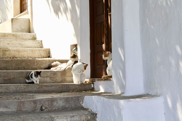 Four Animal Animal Themes Architecture Building Building Exterior Built Structure Cat Cats Day Domestic Domestic Animals Group Of Animals Mammal Nature No People Outdoors Pets Staircase Summer Two Animals Vertebrate Wall - Building Feature Warm White Color
