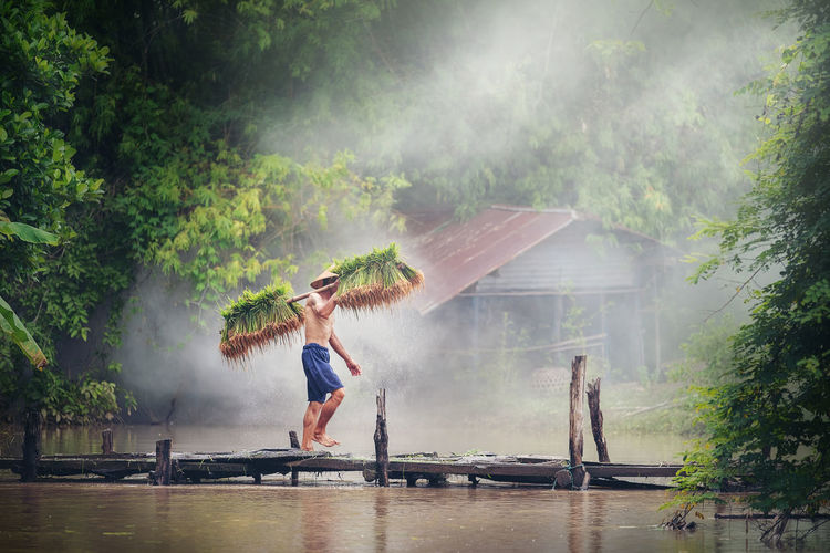 ng, Farmers grow rice in the rainy season, walk on wood bridge local country thailand Farmer Adult Arms Raised Casual Clothing Day Emotion Full Length Happiness Human Arm Lake Motion Nature One Person Outdoors Plant Rain Tree Water Women Young Adult