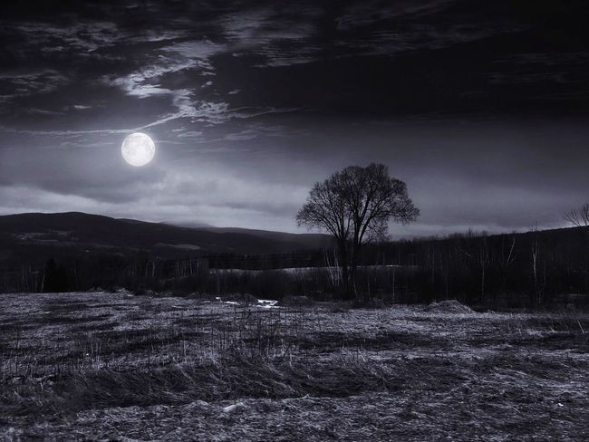 Moon Nature Beauty In Nature Scenics Sky Tranquility Landscape Tranquil Scene Tree Night Outdoors No People Field Cloud - Sky Astronomy