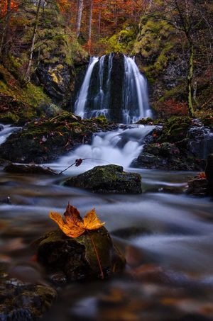 Fall Water Tree Nature Long Exposure Motion Plant Waterfall No People Beauty In Nature Flowing Water Scenics - Nature Autumn Plant Part Day Leaf Forest Flowing Blurred Motion Outdoors Stream - Flowing Water