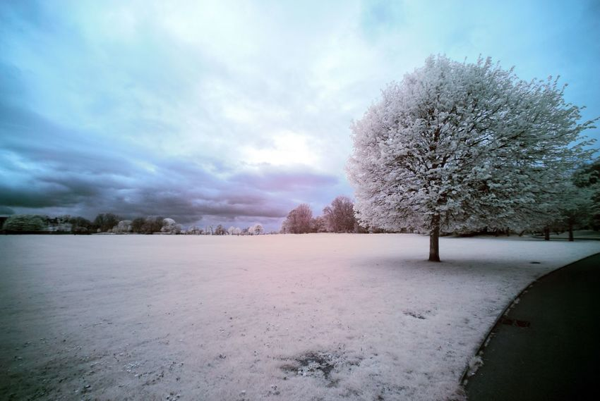 Tree Nature Snow Winter Beauty In Nature Sky Cold Temperature Landscape Outdoors Scenics No People Tranquility Day Cloud - Sky Infrared Photography Stanley Park Liverpool Beauty In Nature Park Grass Tree Tranquility Winter