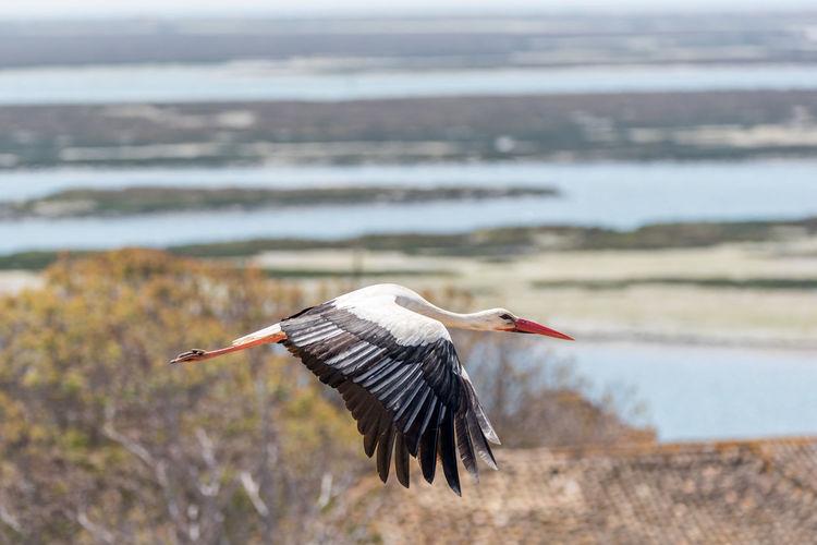 Side view of stork flying over landscape