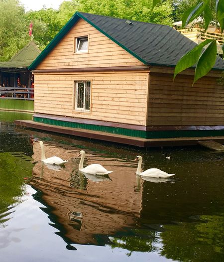 Avian Avians Beauty In Nature Birds Built Structure Calm Water Calmness Canal Gorky Park Green Color Moscow Moscow Life No People Outdoors Park Rippled Standing Water Summer Swans Tranquility Water Water Reflections Waterfront