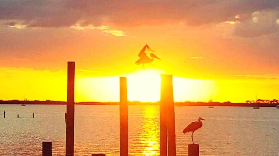 Sunset Flying Sky Sun Travel Sea No People One Animal Tranquility Animal Wildlife Outdoors Nature Scenics Water Pelicans Pelicans In Flight