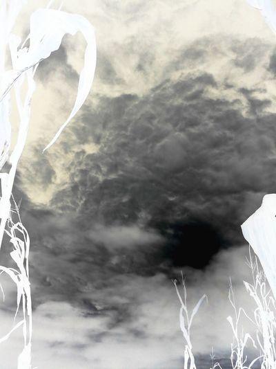 Negative Clouds And Sky Cornstalk Taking Photos