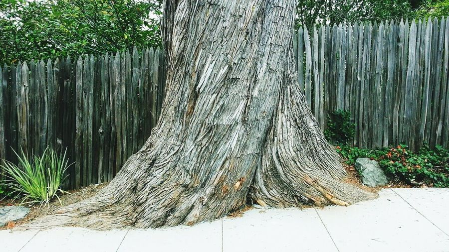 Cypress Monterey Trees Tree Wooden Fence Grape Stakes Streets Of San Francisco Nature On Your Doorstep
