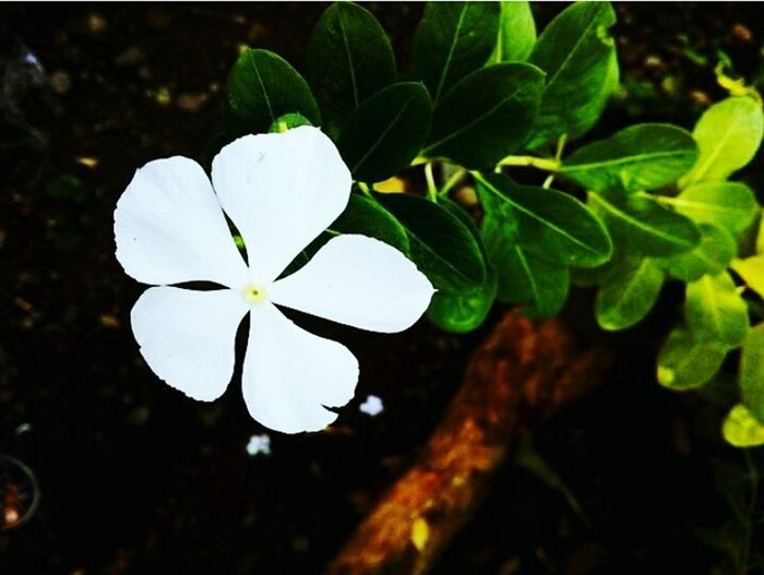 No matter how simple a thing is, learn to appreciate it. God made everything, even just a small piece. In Bloom Plant Life Flowering Plant