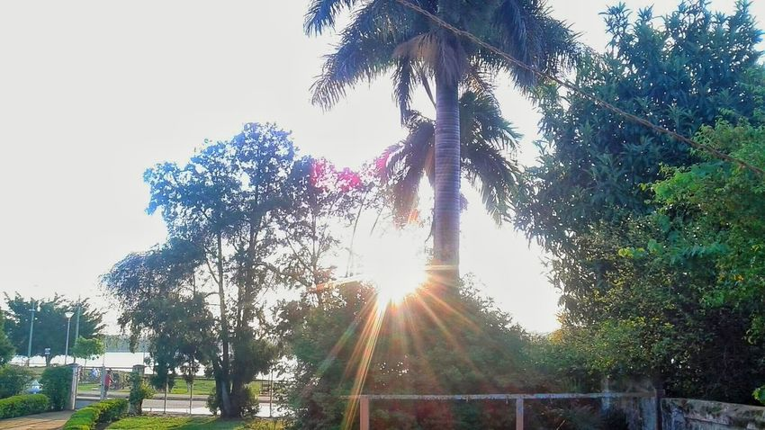 Relaxing Taking Photos Check This Out Enjoying Life Hello World Nature Garden Beautiful Nature Beautiful Leaf Beautiful Day No Filter Hi! EyeEm Nature Lover EyeEm Best Shots Tree And Sky Trees Green Sun Glitch Beautiful Sky Coqueiros Live For The Story