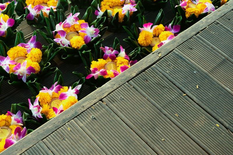 High angle view of multi colored flowering plants on wood