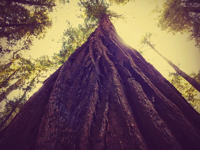 Taking Photos The Great Outdoors For The Love Of Trees ~ What I Did Today California Redwoods Check This Out