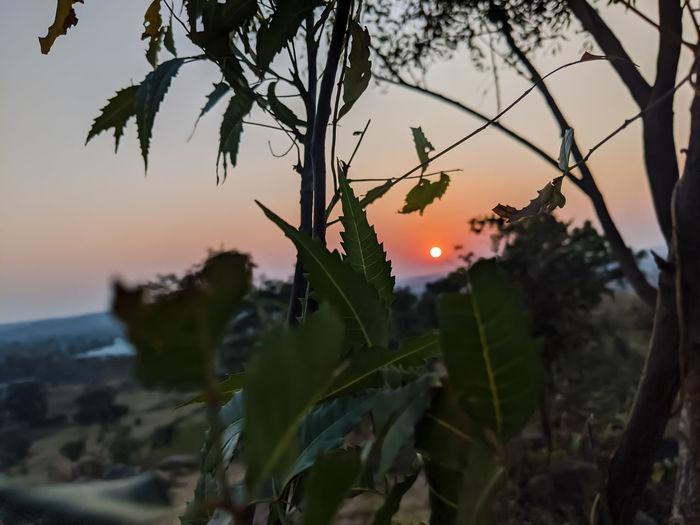 Close-up of orange tree against sky during sunset
