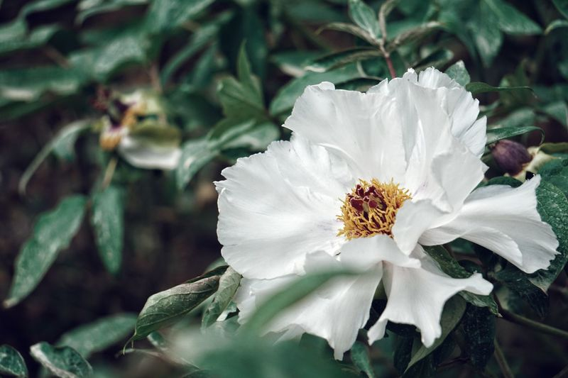 Flower Nature Fragility Beauty In Nature Flower Head Petal Close-up Day Freshness No People Growth Outdoors Plant Leaf Closing