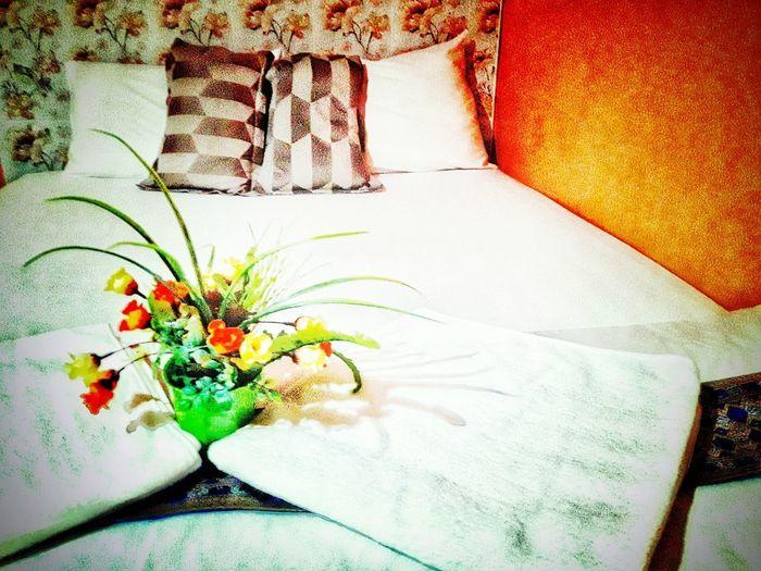 The atmosphere in the bedroom is warm. Flower Close-up Blooming Cosmos Flower Hibiscus In Bloom Gazania Stamen Hydrangea Single Flower Osteospermum Flower Head Petal Pollen Growing Plant Life Stem Fragility Dahlia