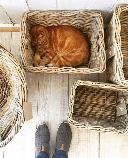 Prince Harry The Cat Sleeping Cat In The Basket  Baskets Cat Mammal Day Indoors  Low Section No People
