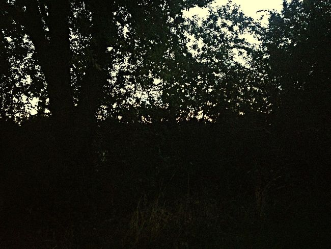EyeEm Nature Lover Narure Tree Black And White