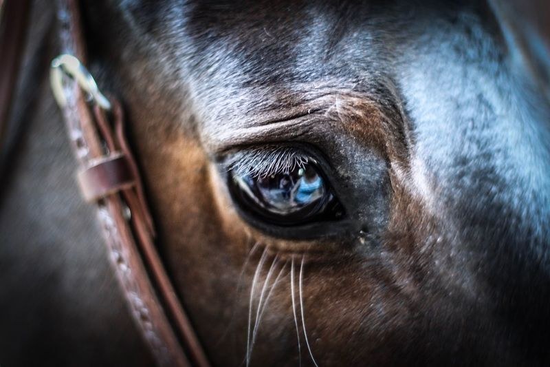 Close-up of horse eye
