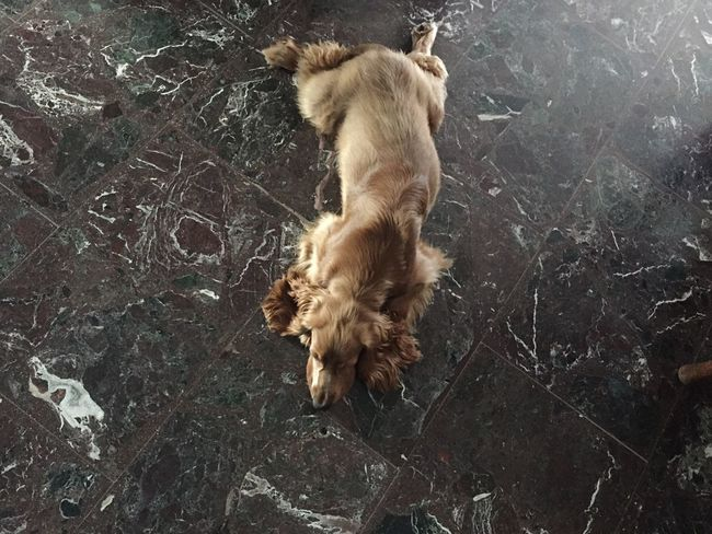 Dog Nature Messy Softness Fur