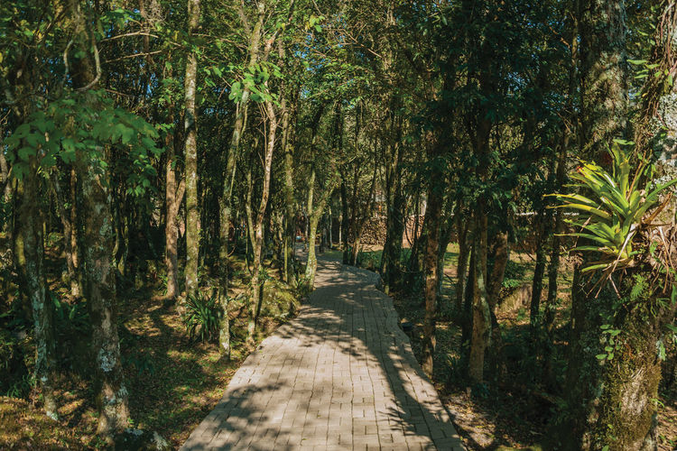 Pathway in a wooded landscape in the sculpture park stones of silence near nova petropolis, brazil.