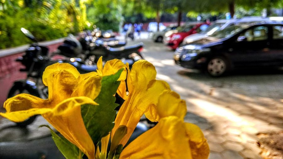 Yellow Car Outdoors Land Vehicle Flower Nature No People Travel Photography Pacificuniversity Udaipur Rajesthan Parking Lot Photography Green Green Green!  Green Green Green!  Trees And Sky Lack City Aravalli Mountain Range Close-up