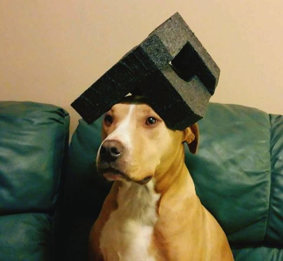 Pets Corner Debo is a block head. Blockhead I Love My Dog I Love Taking Pictures <3 My Dogs Are Cooler Than Your Kids Enjoying Life Photooftheday My Pitbull Pet Lover Pet Photography