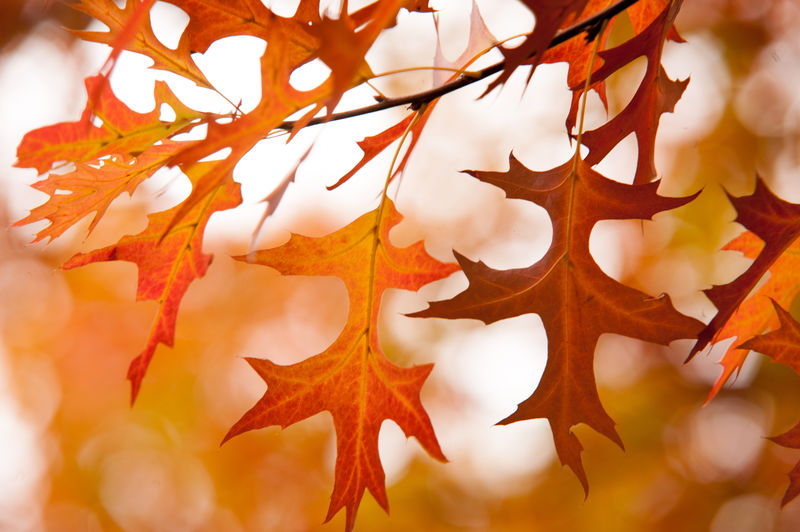 Scenic View Of Red Leaves On Tree