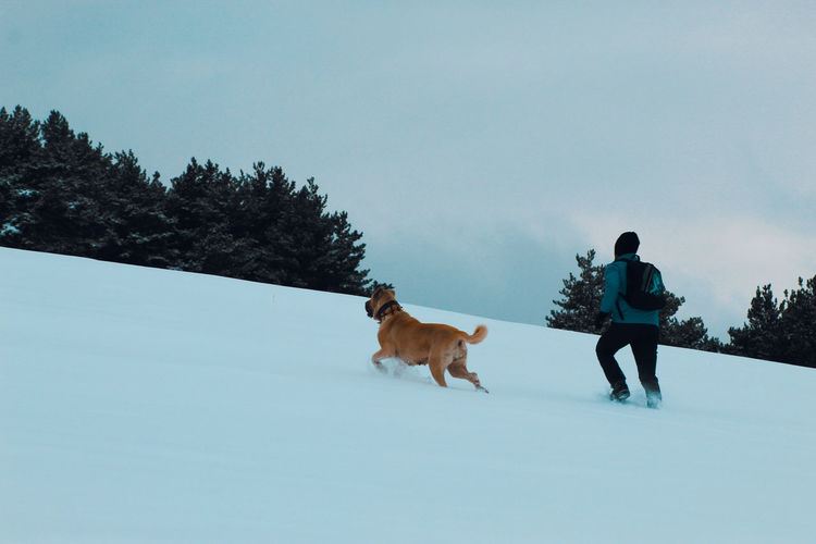 Rear view of dogs on snow field against sky
