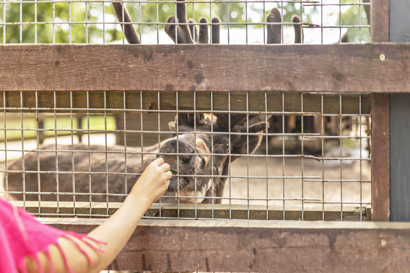 Midsection of person in cage at zoo