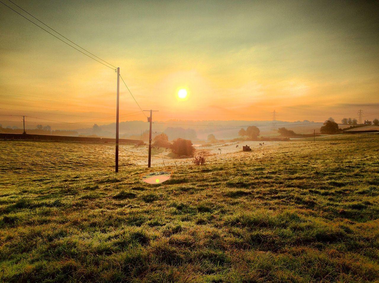 Grassy landscape during sunset