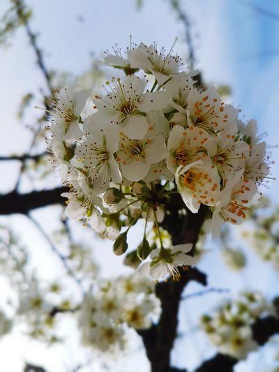 Spring 1 EyeEm