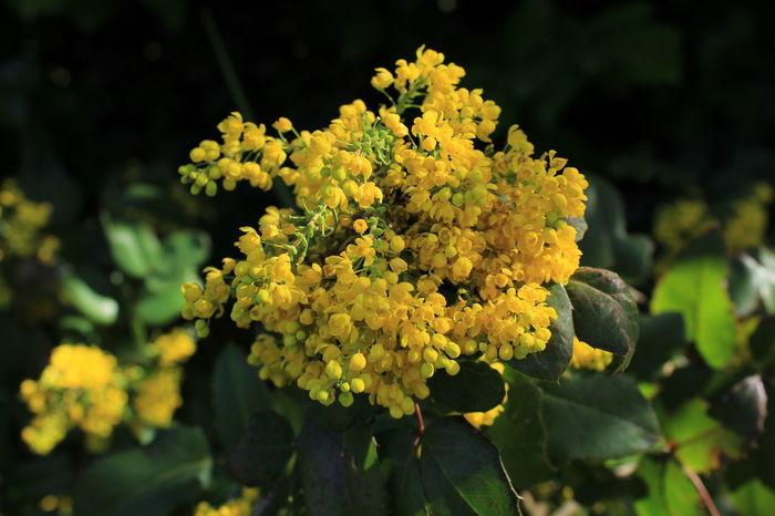 Flower Yellow Fleur Fleur Jaune Flower First Eyeem Photo