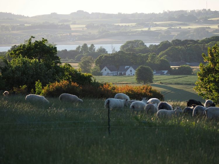 Summernight at the Countryside in Denmark. With a View over Lammefjorden