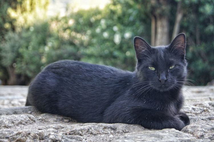 Black Cat Mallorca SPAIN Stairs Animal Animal Themes Black Color Cat Close-up Day Domestic Animals Domestic Cat Feline Focus On Foreground Looking At Camera Mammal Nature No People One Animal Outdoors Pets Portrait Whisker