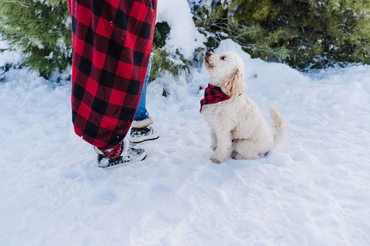 Low section of person with dog in snow