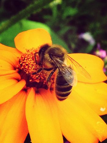 Flower Flower Porn Insects  EyeEm Nature Lover