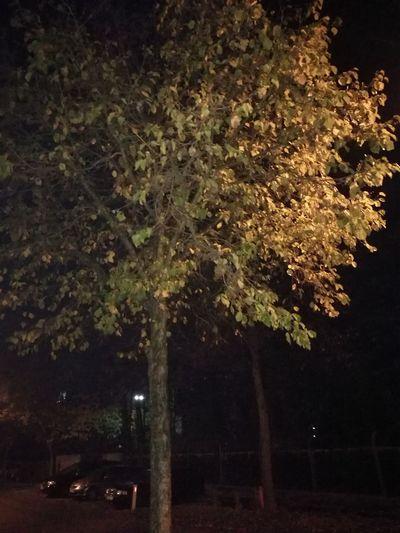 Close-up of tree at night