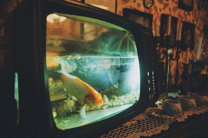 ''Amelie had one firend. Blubber. The home enviroment has made blubber suicidal.'' -Amelie Animal Themes Animals In Captivity Aquarium Close-up Day Fishbowl Goldfish Indoors  Nature No People One Animal Pets Swimming Technology
