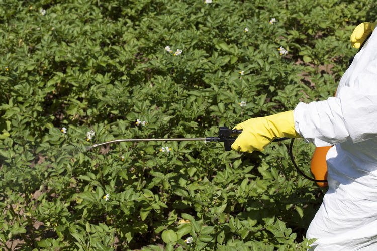 Midsection Of Farmer Spraying Pesticide On Crop